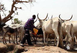 Herdsmen/Farmers Conflict: Significance and Way Out